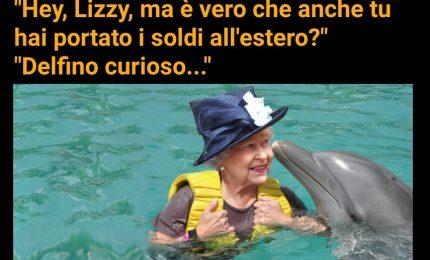 E povero anche il delfino