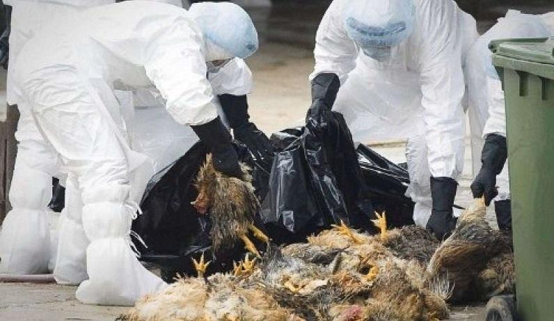 Scoppia l'influenza aviaria – La brutale fine delle Guerre Indiane – La Luftwaffe incendia Londra