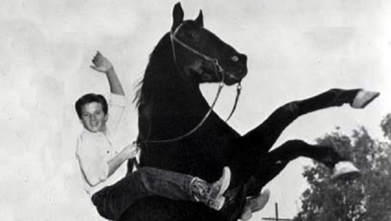 Furia, cavallo del West