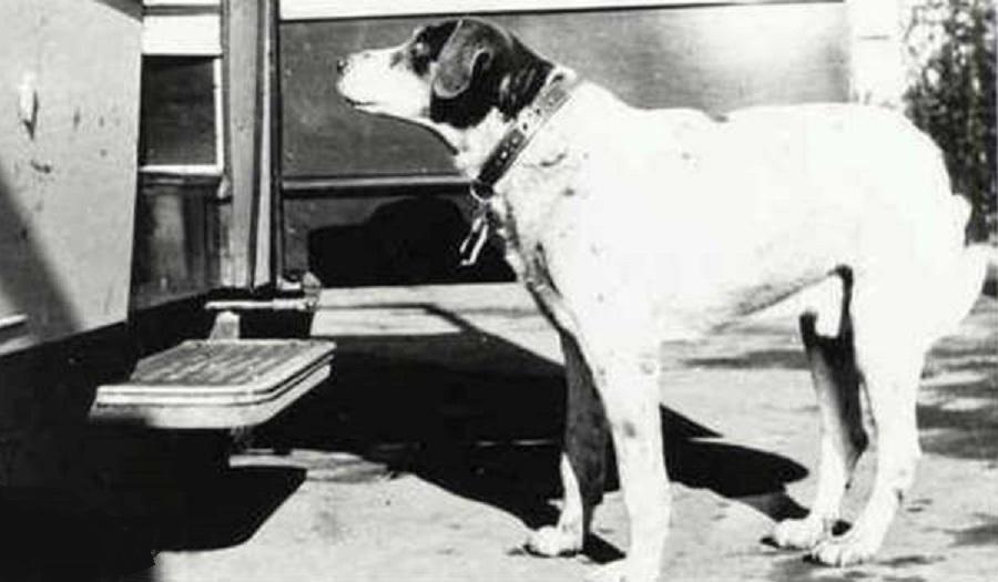 Fido, il cane più fedele della storia – L'era della Restaurazione – L'impresa del Leone di Caprera