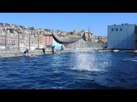 Zona gialla, Liguria: riapre l'acquario di Genova dopo quattro mesi di chiusura
