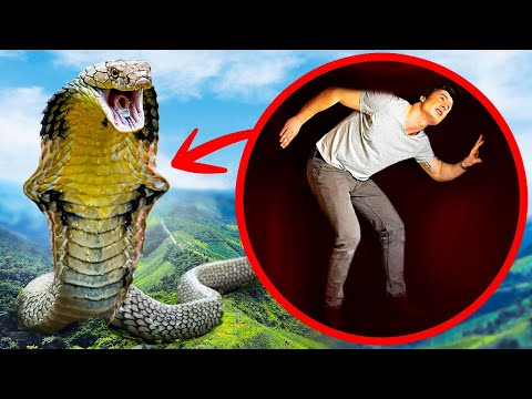 E Se Il Più Grande Serpente Mai Esistito Ti Inghiottisse Tutto Intero?