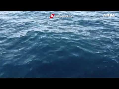 Balena grigia avvistata a Ponza: un evento eccezionale
