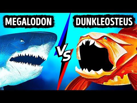 Che Succederebbe se il Megalodonte Incontrasse il Pesce con il Morso Più Potente del Mondo