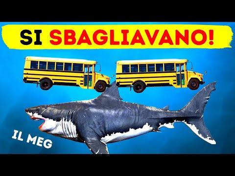 Il Gigantesco Megalodonte Era 2x Più Grande Di Quanto Pensavamo
