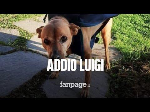 """Morto Luigi, il """"cane-postino"""" diventato eroe durante il lockdown"""