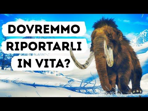 Forse Vedremo Di Nuovo I Mammut Vivi E Vegeti Nel Prossimo Futuro